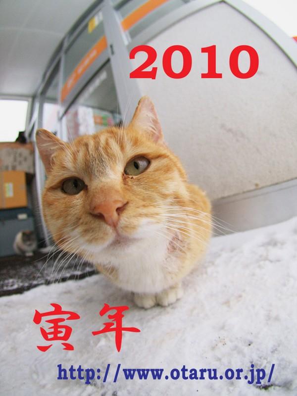 2010 寅年 年賀状