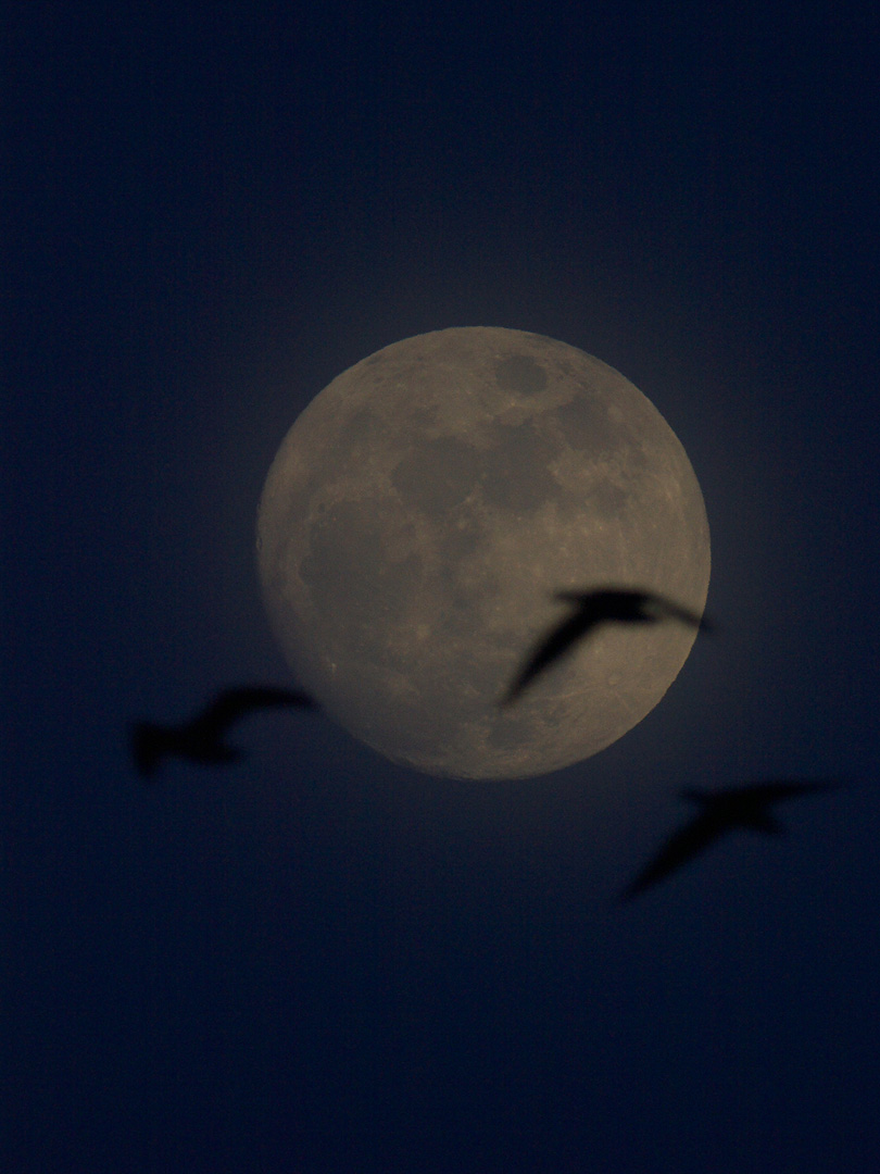 moonlight_goose_001