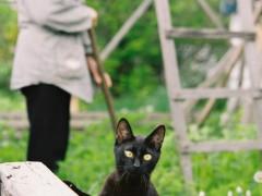 自選 黒猫の瞳と背景のおばちゃんが決め手!
