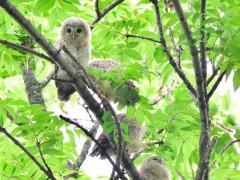 今年のヒナは4羽いるというだけの証拠写真(^_^;)