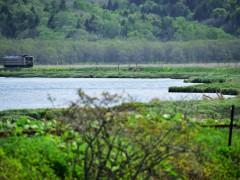 厳しい寒さの冬の湿原の時期にも写してみたい情景だ.....
